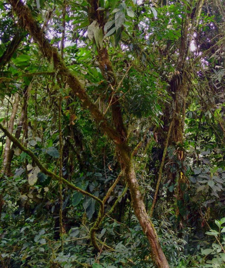 Pachijal